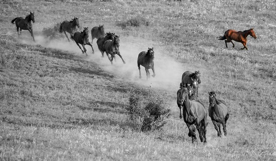 horse herd wide